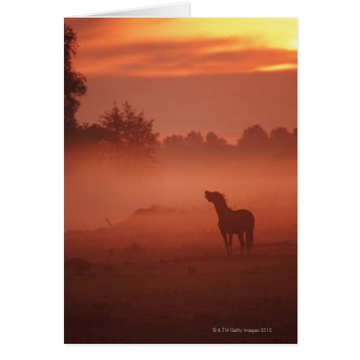 Horse at sunrise greeting card