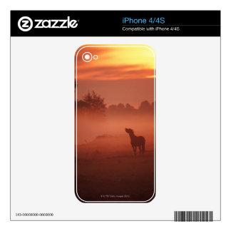 Horse at sunrise iPhone 4S decals