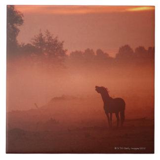 Horse at sunrise tile