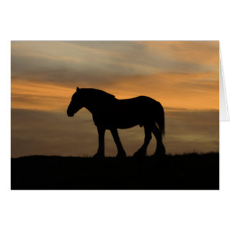 Horse at sunset card
