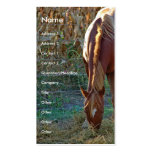 Horse at Sunset Double-Sided Standard Business Cards (Pack Of 100)
