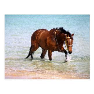 Horse at the beach Postcard
