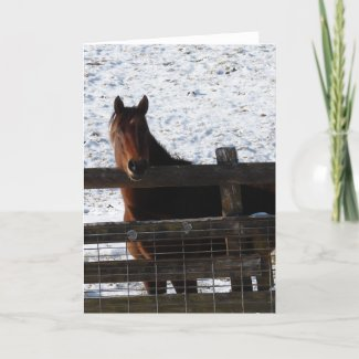 Horse at the Fence card