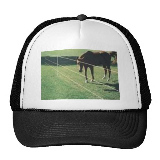 horse at the fence trucker hat