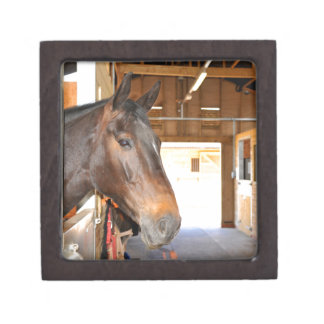 Horse at the stables jewelry box