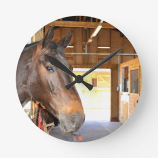 Horse at the stables round clock