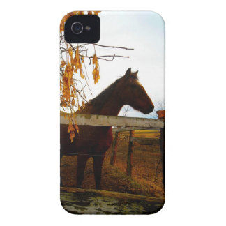 Horse Awaiting Treats iPhone 4 Case-Mate Case