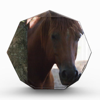 Horse Awards