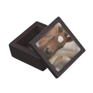 Horse Baby Premium Gift Box