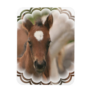 Horse Baby Premium Magnet Rectangle Magnet