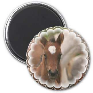 Horse Baby Round Magnet Magnets