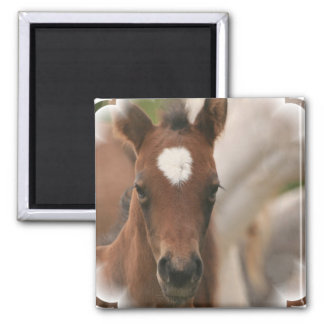 Horse Baby Square Magnet Magnet