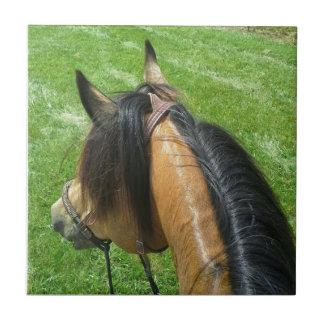 Horse Back Riding Tile