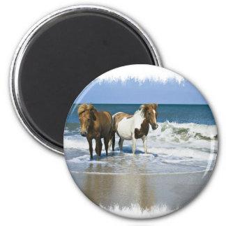 Horse Beach Magnet