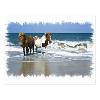 Horse Beach Postcard