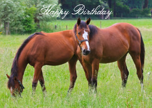 Horse cards zazzle horse beautiful custom horses birthday card m4hsunfo
