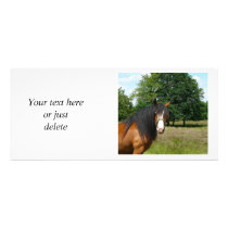 Horse beautiful photo custom rack card