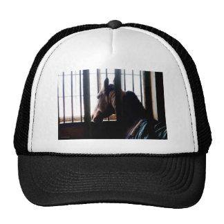 Horse Behind Bars Mesh Hat