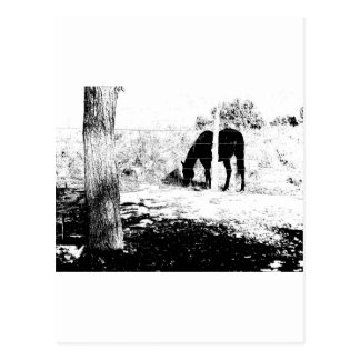 Horse Behind Fencepost in Pen and Ink Postcard