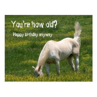 Horse Birthday Postcard