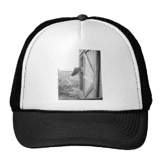 Horse Black and White Photography Hat