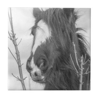 Horse black and white tile