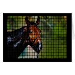 Horse blank card template note card