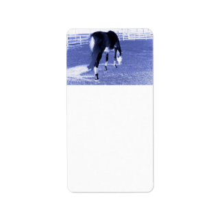 horse blue grazing in equine image address label