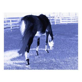 horse blue grazing in equine image custom letterhead