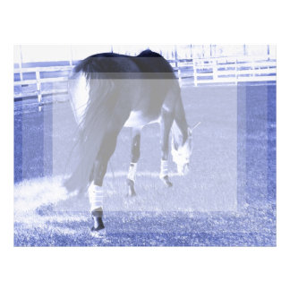 horse blue grazing in equine image customized letterhead