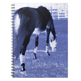horse blue grazing in equine image spiral notebooks