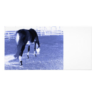 horse blue grazing in equine image photo card template