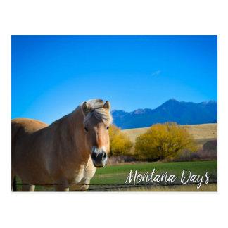Horse Blue Sky and Montana Mountains Postcard