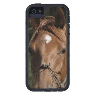 Horse Breeds iPhone 5 Case