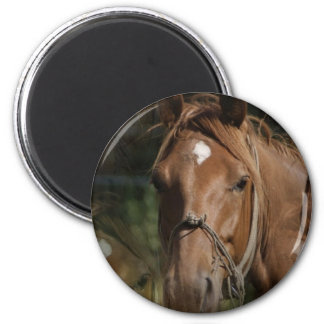 Horse Breeds Magnet Fridge Magnet