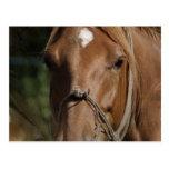 Horse Breeds Postcard