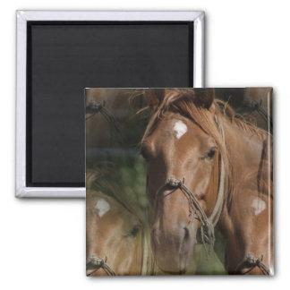 Horse Breeds  Square Magnet Fridge Magnets