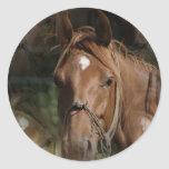 Horse Breeds Stickers