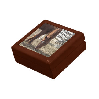 Horse Browsing Wooden Box