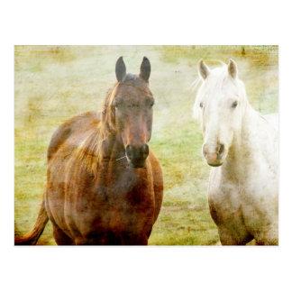 Horse Buddies Postcard