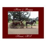 Horse & Buggy, Kauai, HI Postcard