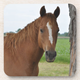 Horse by Tree Beverage Coaster