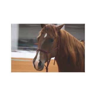 Horse Canvas Gallery Wrap Canvas