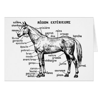 Horse Stationery Note Card