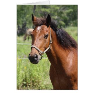 Horse Greeting Card