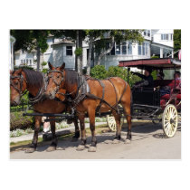 Horse & Carriage on Mackinac Island MI Postcard