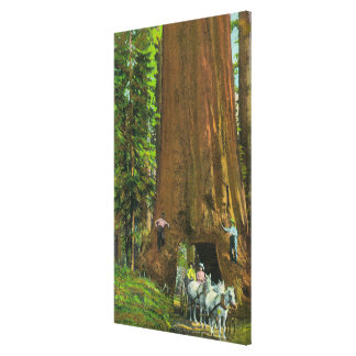 Horse Carriage Under a Giant Redwood Stretched Canvas Print