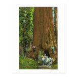 Horse Carriage Under a Giant Redwood Postcard