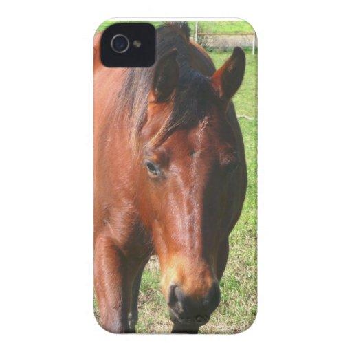 Horse Case Blackberry Bold Case