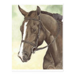 HORSE Champion Appendix QH Mare Postcards